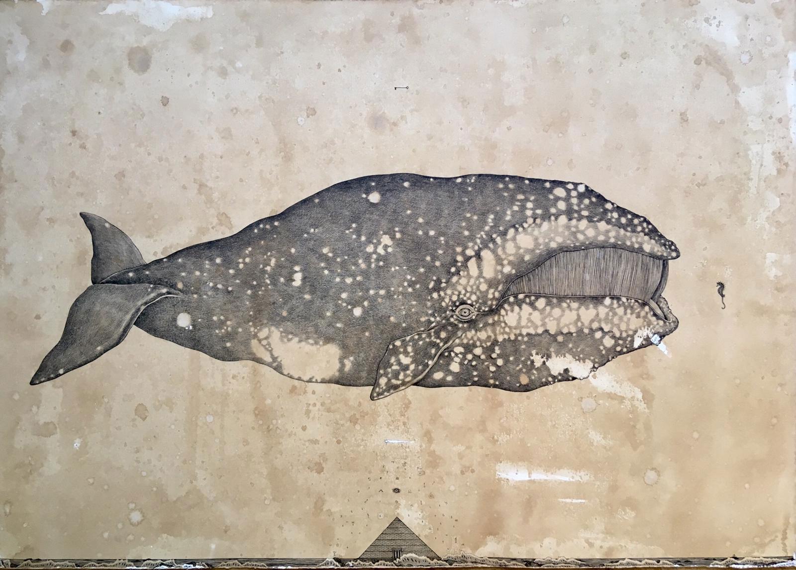 Andrea-Collesano-artist-balena